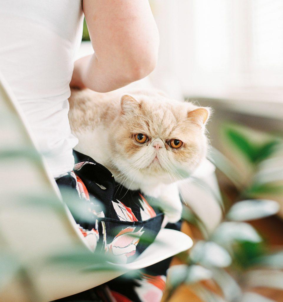 rosse kat op schoot van bruid