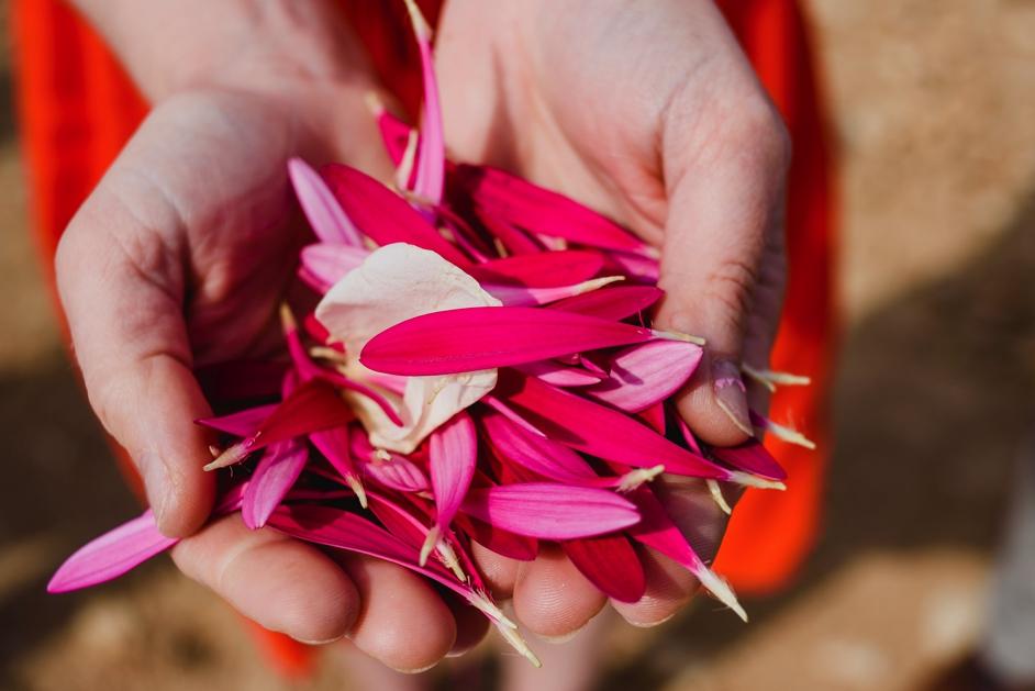 handen met roze blaadjes in