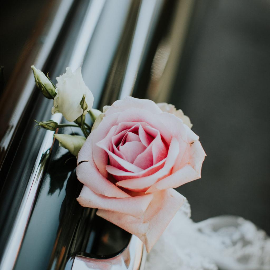 Roze roos aan deurklink auto