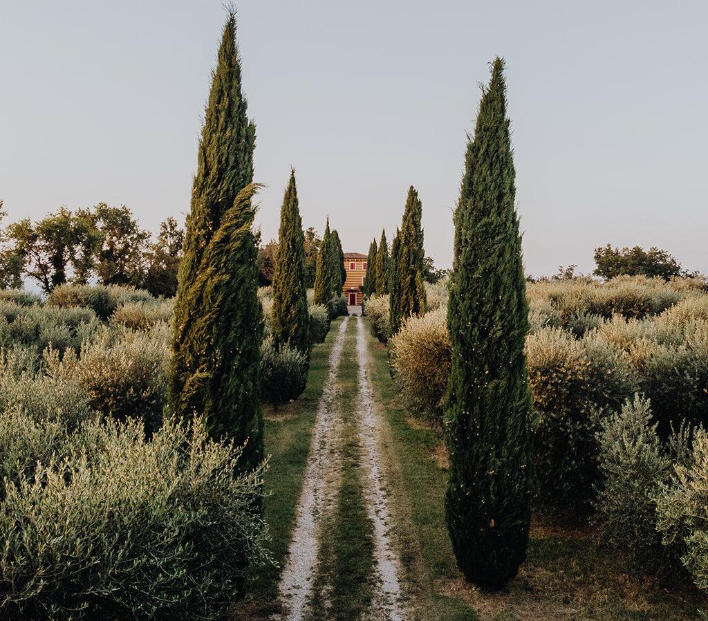 Trouwen in Italië aan het gardameer op een rustieke locatie tussen de olijfbomen